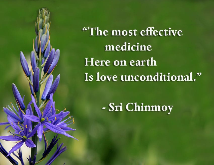 Quote Love Entrancing Quotes On Love Sri Chinmoy Quotes